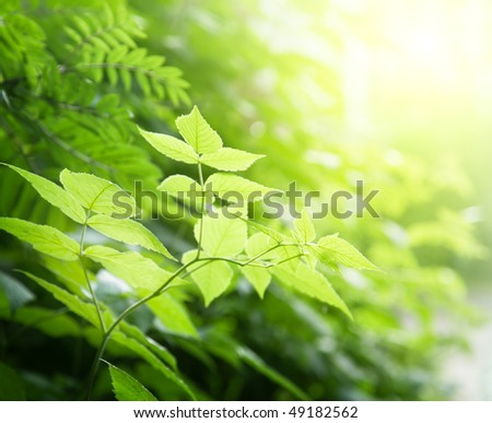 green leaves in deep forest - stock photo