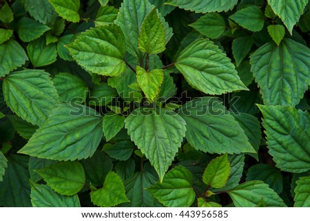 green leaves in deep green forest - stock photo