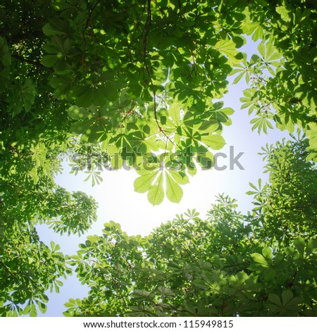 Green leaves in forest - stock photo