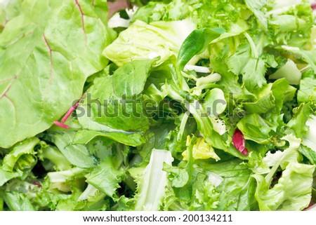 green leaves in fresh italian lettuce appetizer close up - stock photo