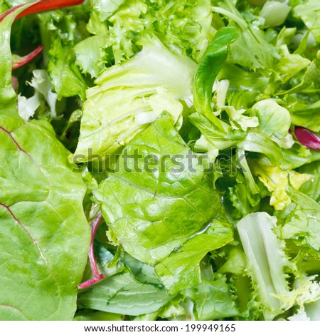 green leaves in fresh italian lettuce mix close up - stock photo