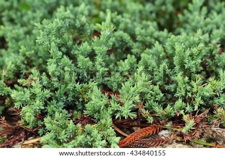 green leaves in garden - stock photo