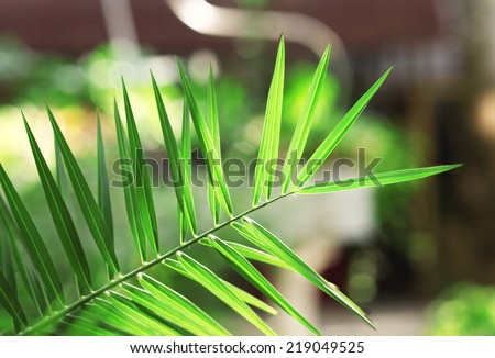 Green leaves in garden close-up - stock photo