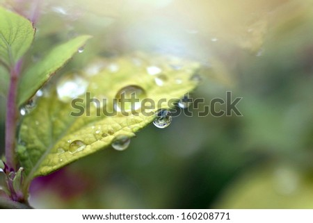 Green leaves in morning dew - stock photo