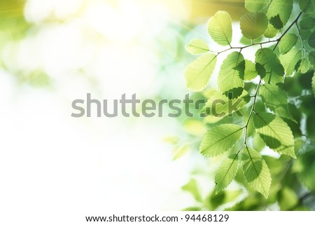 Green leaves in morning,natural background. - stock photo