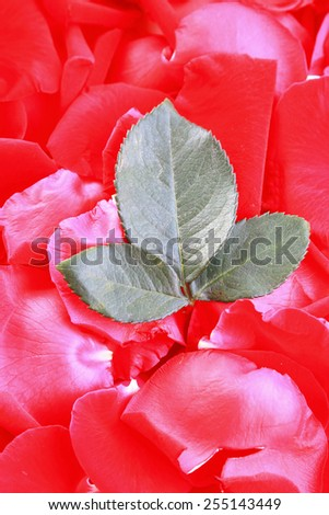Green Leaves in rose petals