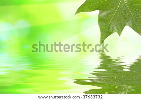 Green leaves in spring - stock photo