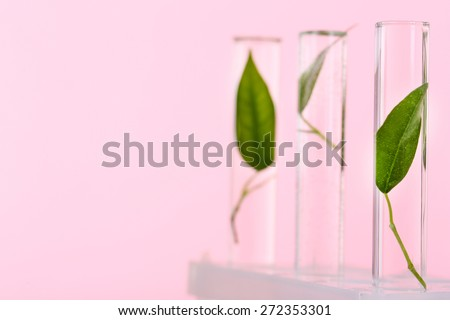 Green leaves in test tubes on pink background - stock photo