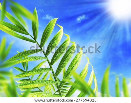 Green Leaves in the Sunlight with Raindrops, Freshness Environment  - stock photo