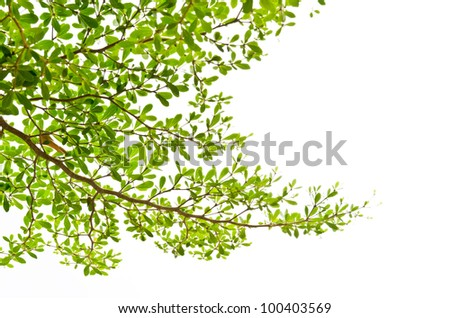 Green leaves isolated on the white. - stock photo