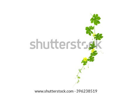 Green leaves isolated on white background ,copy space for text - stock photo