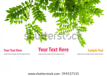 Green leaves isolated on white background for website - stock photo