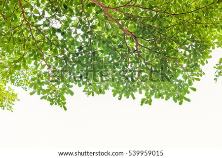 green leaves isolated on white background with copy space.