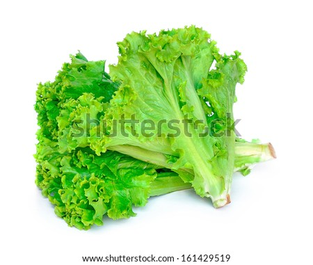 green leaves lettuce isolated on white background - stock photo