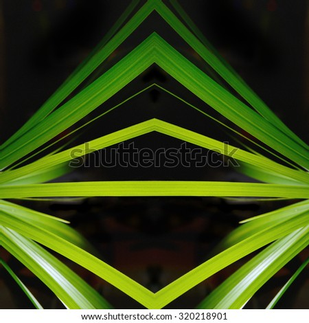 Green leaves mirror on square black background - stock photo