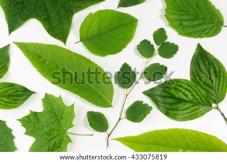 green leaves natural background