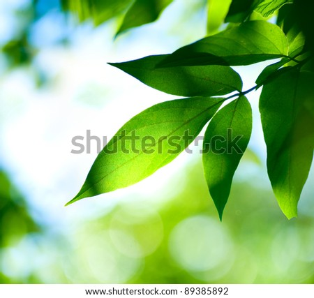 Green Leaves.Nature - stock photo