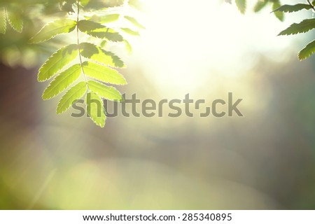 green leaves. Nature background - stock photo