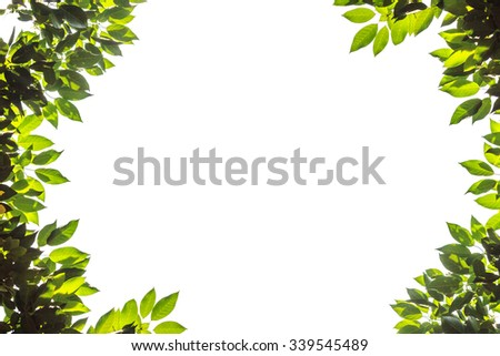 green leaves nature of frame on white background