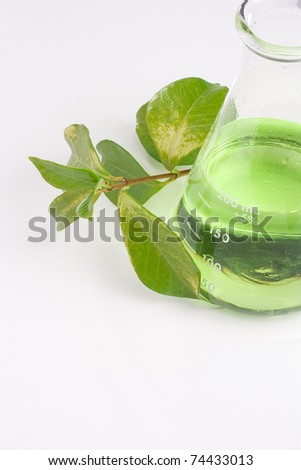 Green leaves next to an erlenmeyer flask with a green liquid in it. - stock photo