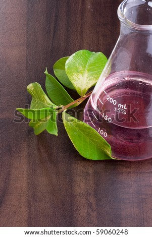 Green leaves next to an erlenmeyer flask with a red liquid in it. - stock photo