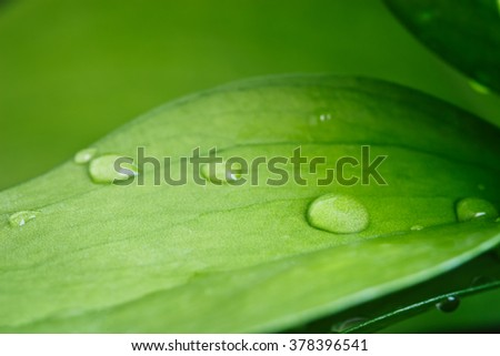 Green leaves of a plant with drops of water, close-up - stock photo