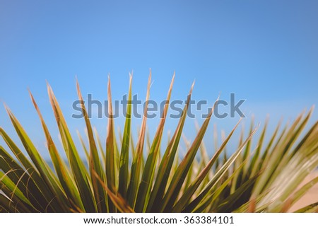 Green leaves of exotic plant on blue sky background