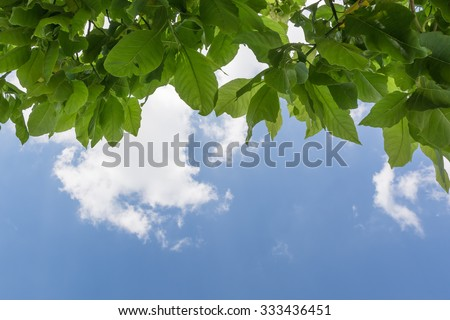 Green leaves of the tree and sky background - stock photo