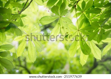 Green Leaves of Trees With Sunlight In Spring - stock photo