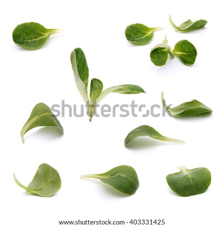 Green leaves of valeriana salad isolated on white with shadow