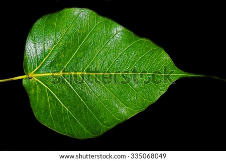 Green leaves on a black background. - stock photo