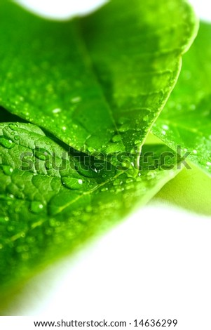 green leaves on a white background - stock photo
