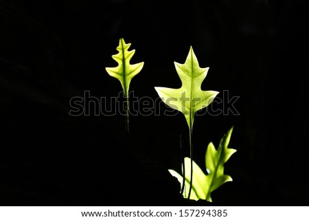 green leaves on black background - stock photo