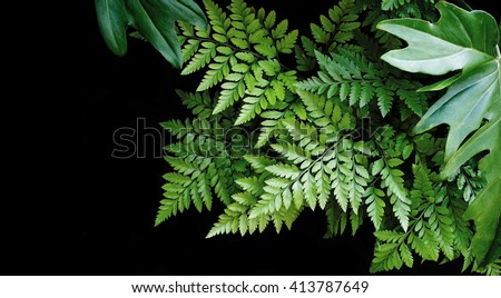 Green leaves on black background, soft focus, tropical forest concept - stock photo