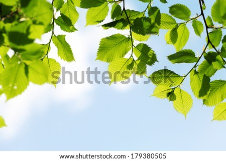 green leaves on blue sky background at sunny spring day - stock photo