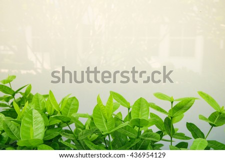 Green leaves on Nature reflection Background , Soft focus - stock photo