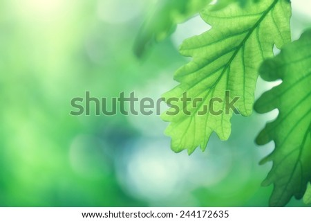 green leaves on the green background - stock photo