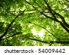 green leaves on the tree - stock photo