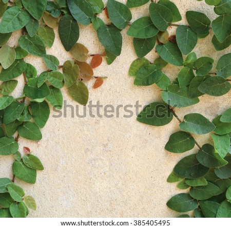 Green Leaves On The Wall background. - stock photo