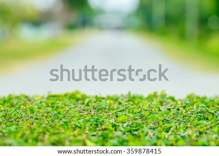 Green leaves on walkway background - stock photo
