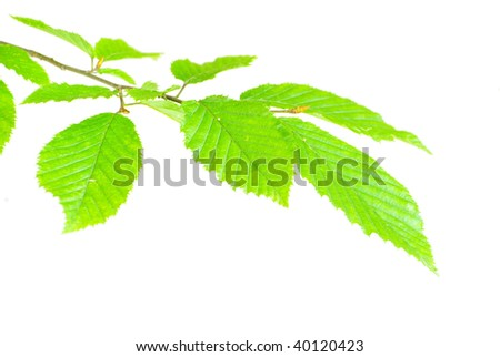 green leaves on white