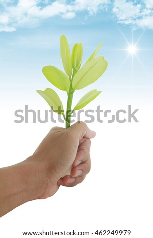 green leaves on white background,Summer branch with fresh green leaves