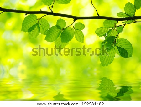 green leaves over green background
