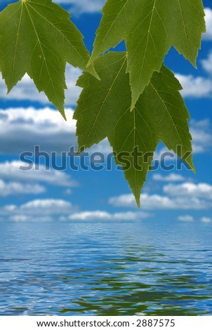 Green leaves over simulated water reflection - stock photo
