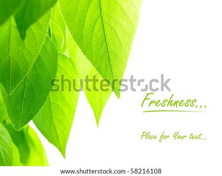green leaves over white background with copy space for text