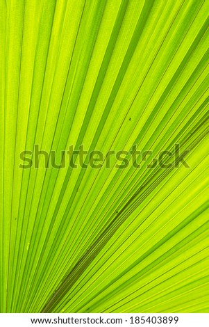 Green leaves. Palm leaf pattern. - stock photo