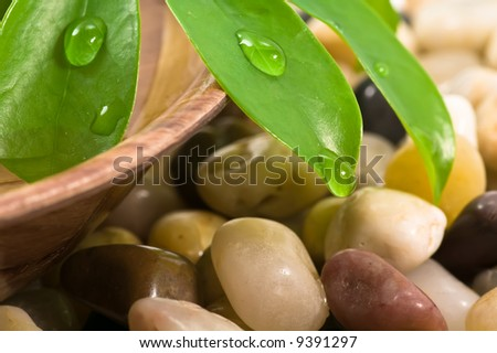 Green leaves, pebbles and bowl of water