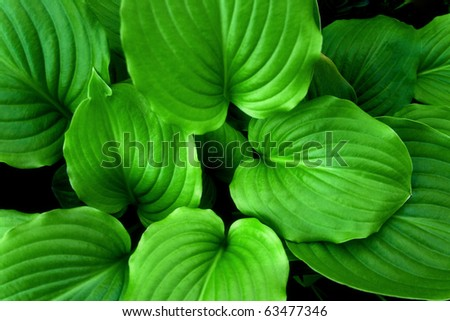 Green leaves photographed in the garden - stock photo