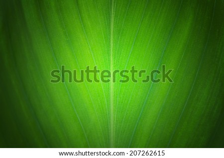Green leaves plant texture background