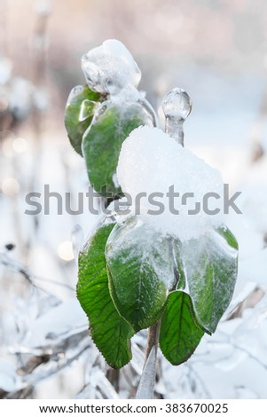 Green leaves, put in snow and ice with icicles after ice rain,storm in Moscow - stock photo